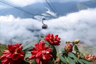Chiêm ngưỡng 40 loài hoa đỗ quyên trên đỉnh Fansipan