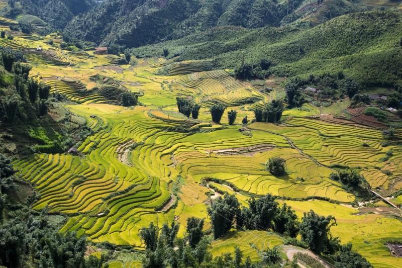 Những nương lúa ngả vàng đẹp mê hoặc nhìn từ Cáp treo Fansipan