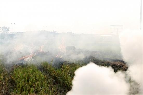 Hiến kế xóa tình trạng ô nhiễm môi trường từ đốt rơm rạ