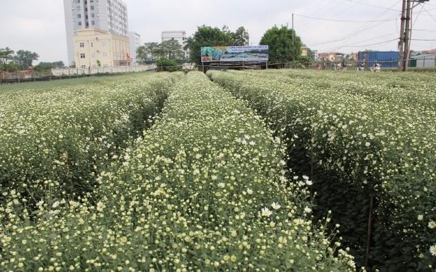 Trồng hoa theo tiêu chuẩn VietGAP cho hiệu quả kinh tế cao