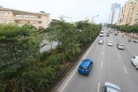 Đầu Xuân Kỷ Hợi 2019, Thành phố phấn đấu trồng 150.000 cây xanh