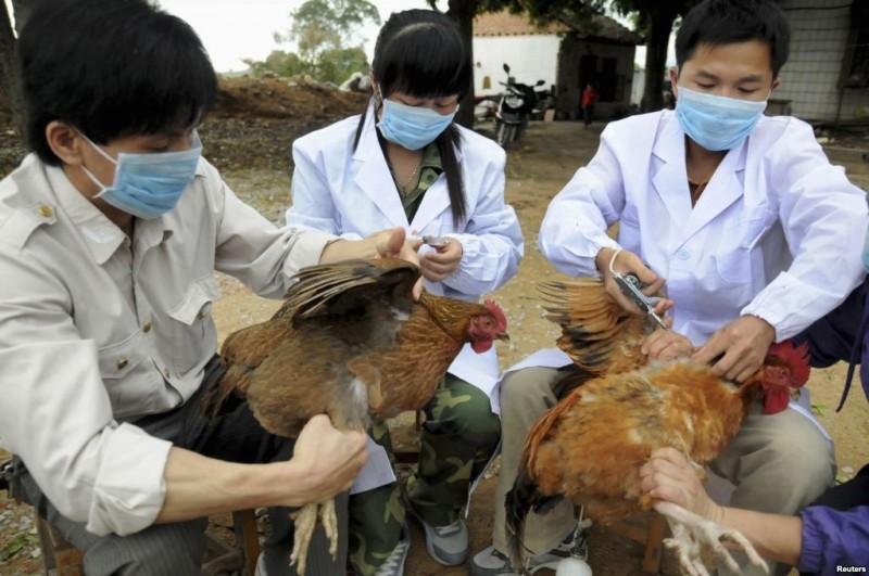 Hà Nội tăng cường phòng chống cúm gia cầm