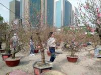 Nhộn nhịp chợ hoa chiều 29 Tết