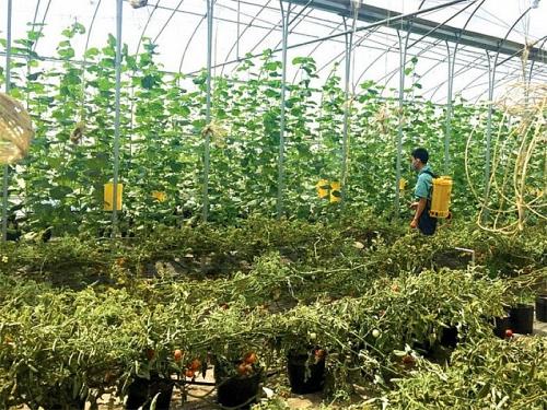 Hà Nội quyết định bãi bỏ 82 thủ tục hành chính thuộc lĩnh vực nông nghiệp