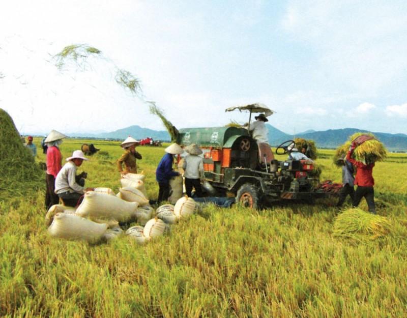 Ưu tiên hỗ trợ DN phát triển nông nghiệp