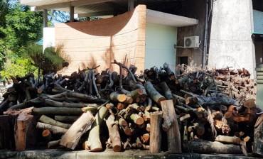 Nguy hiểm từ gỗ, củi chất đống trong Công viên Thống Nhất