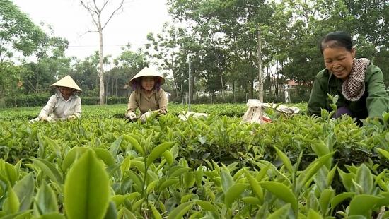 Tháo gỡ khó khăn, vướng mắc các dự án khối nông nghiệp trên địa bàn huyện Ba Vì