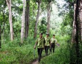 Xử lý nghiêm người đứng đầu không phát hiện, ngăn chặn hành vi phá rừng