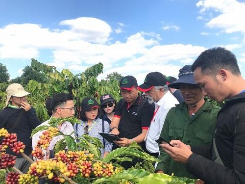 NESCAFÉ Plan mười năm gắn kết với nông dân nâng cao chất lượng cà phê Việt Nam